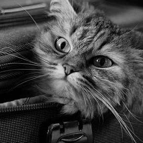 4 основных правила для сбора чемодана для отдыха
