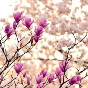 Насколько вы готовы к весне?