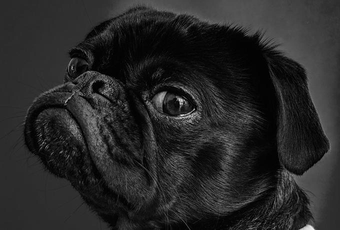 Собаки действительно способны определить, достоин ли человек доверия