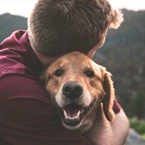 Смерть собаки может стать не менее тяжелым событием, чем потеря близкого человека