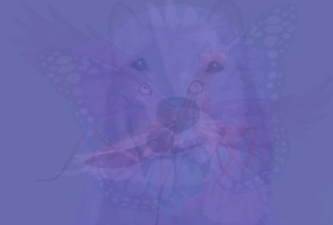Животное, которое вы увидите первым на этой картинке, раскрывает суть вашей души